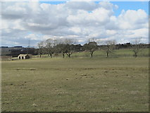 NZ0167 : Farmland east of Carr Houses by Mike Quinn