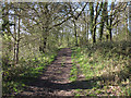 TQ6885 : Track in Northlands Wood, Langdon Hills Country Park by Roger Jones