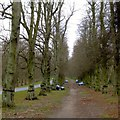 SK6276 : The Lime Avenue with parked cars by David Lally