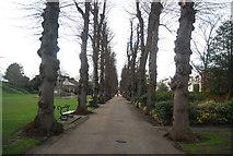 TR1457 : Path across Dane John by N Chadwick