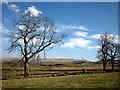 NY5906 : Trees and pastureland near Whitebrow by Karl and Ali