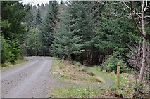 NT2840 : Footpath and forest road, Glentress by Jim Barton