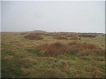 NZ7714 : Long  Barrow  on  Newton  Mulgrave  Moor by Martin Dawes