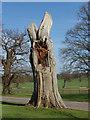 SU9570 : Dead oak trunk, Duke's lane by Alan Hunt