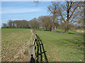 SU9570 : Menzies plantation by Alan Hunt
