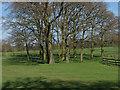 SU9570 : Slans Hill, Windsor Great Park by Alan Hunt