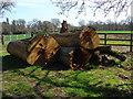 SU9470 : Log pile by Alan Hunt