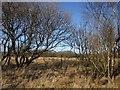SS5714 : Trees on Beaford Moor by Derek Harper