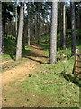 TL0037 : Footpath toward Millbrook by Philip Jeffrey