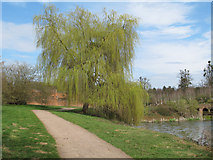 TL8425 : Willow by the lake, Marks Hall Estate by Roger Jones