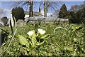 SU2499 : Down with the primrose by Bill Nicholls