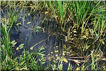 TG3504 : Wetland plants by Jeremy Halls