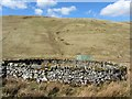 NT8009 : Sheepfold below Deel's Hill by Andrew Curtis