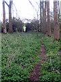 SP7235 : Path to Thornborough Mill by Philip Jeffrey