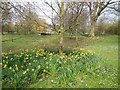 TQ3508 : Flowers by Falmer Pond by Paul Gillett
