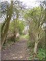 TM3976 : Footpath to Wenhaston Crossing by Adrian Cable