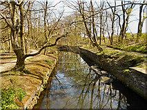 SD7009 : River Croal, Queen's Park by David Dixon