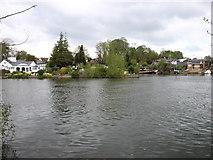 TQ1169 : The River Thames near Sunbury by David Purchase