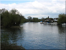 TQ0866 : The River Thames at Desborough Island by David Purchase