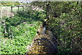 SP7039 : Stream between the fields by Philip Jeffrey