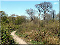 TQ6995 : Coppice with standards, Norsey Wood by Robin Webster