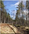NH3629 : Scots pine in Breckry Wood, Corrimony by Craig Wallace