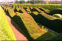 TQ4179 : Sculptural Hedges by Robert Rimell