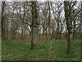 TQ1416 : Baldwins Wood by Simon Carey