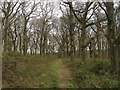 TQ1316 : Baldwins Wood by Simon Carey