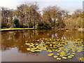 SD6008 : Haigh Country Park, Swan Pond by David Dixon
