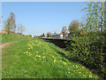 SK5443 : Basford: cowslips by the Leen by John Sutton