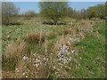 TQ0356 : Broad Mead meadows by Alan Hunt