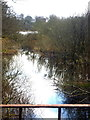 H6016 : Dromore River from the Iron Bridge on the Dartrey estate by D Gore
