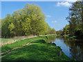TQ0152 : River Wey Navigation by Alan Hunt