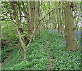 TG3606 : Path along the edge of disused pit, Buckenham Woods by Evelyn Simak