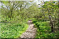 SU7089 : Bridleway from Cookley Green by Graham Horn