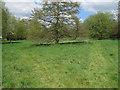 TL6730 : Piper's Meadow, Great Bardfield by Roger Jones