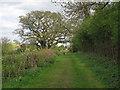 TL6731 : Footpath to Mill by Roger Jones