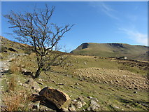 SH5858 : Tree beside the Llanberis Path by Gareth James