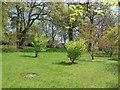 TQ3431 : Wakehurst Place:Emerging trees by Alan Hunt