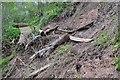 NT7970 : Landslide in Pease Dean by Jim Barton