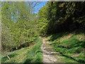 TQ3331 : Wakehurst Place: Bloomer's Valley by Alan Hunt
