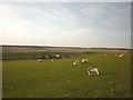 NY7368 : Sheep above Cowburn Rigg by Karl and Ali