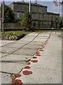 ST8745 : Poppies in a line by Neil Owen