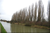 TL3700 : Line of trees by the Lea Navigation by N Chadwick