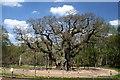 SK6267 : The Major Oak by Graham Hogg