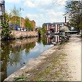 SJ9398 : Geese along the Ashton Canal by Gerald England