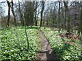 ST7684 : The Cotswold Way in Walk Wood by Ian S