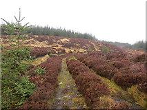 NR8049 : Unused forest track by John Ferguson