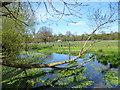 SU5373 : River Pang upstream of  Frilsham by Des Blenkinsopp
